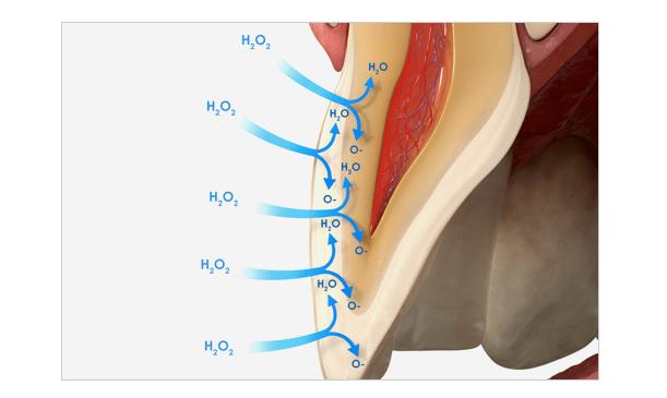 Mehanizam Delovanja Vodonik Peroksida